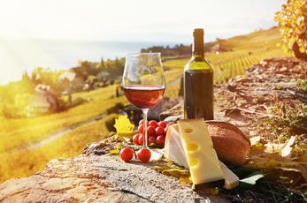 Vineyard with wine and cheese